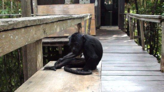 Bilde fra Juma Amazon Lodge