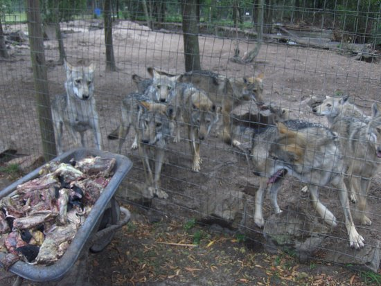 Kenilworth, África do Sul: Tsitsikamma Wolf Sanctuary