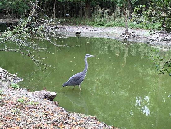 Le Marais aux Oiseaux