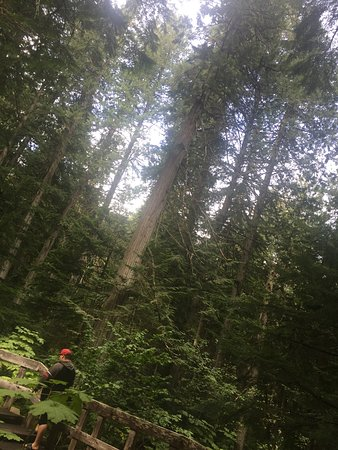 Giant Cedars Boardwalk Trail照片