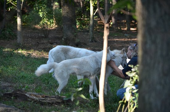 Columbia, NJ: Owner in with the Arctic Wolves