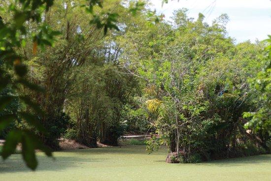 Bosque da Ciência : Lago