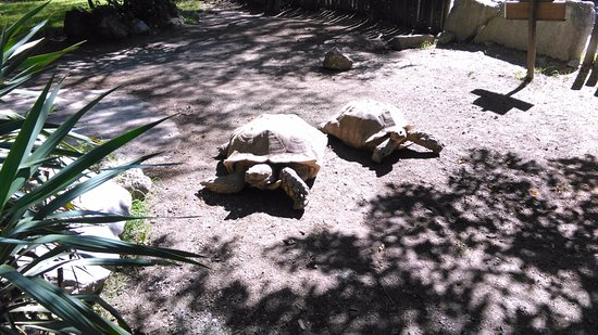 Anif, Austria: Huge turtles