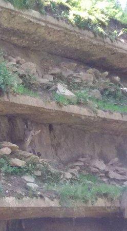Bunker Mooseum: stambecchi
