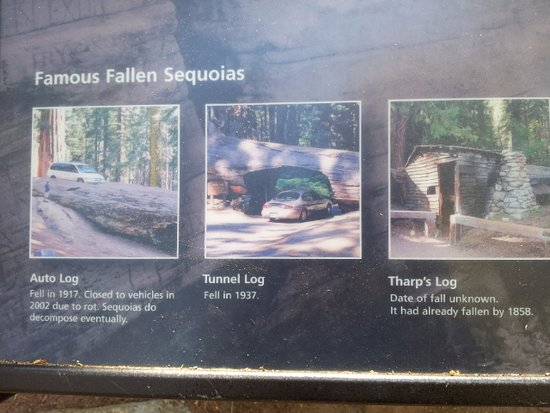 Three Rivers, CA: Famous Fallen Sequoias