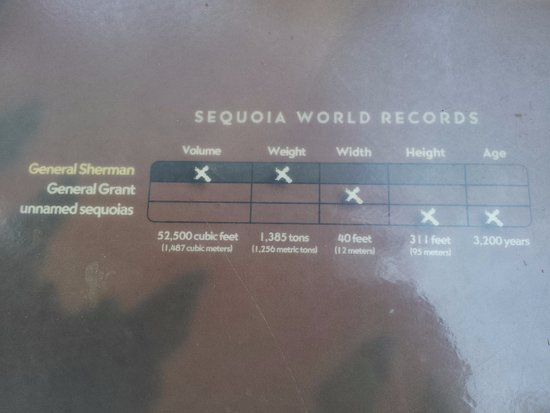 Three Rivers, CA: Sequoia World Records