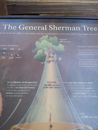 Three Rivers, CA: The General Sherman Tree