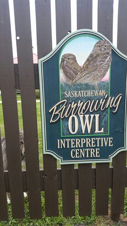 Burrowing Owl Interpretive Centre : 20160904_122506_large.jpg