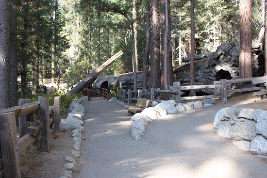 Three Rivers, CA: At the Sherman Tree trail