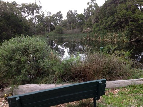 ‪Glen Iris Park Wetlands‬