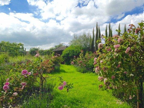 Norfolk, UK: Garden in July