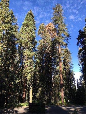 Three Rivers, CA: Perfect weather, beautiful trees.