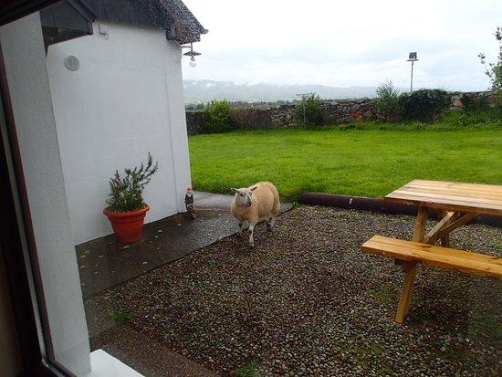 Milltown, Irlandia: Guests