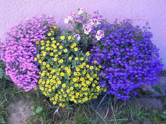 Malga Juribello: angolo in fiore