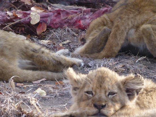 Arathusa Safari Lodge ภาพถ่าย