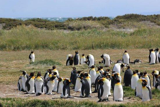 Tierra del Fuego Foto