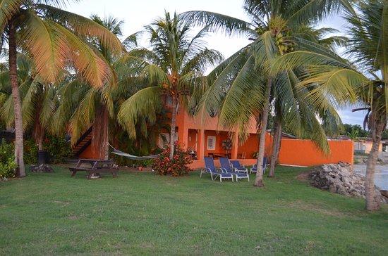 Bay Guesthouse: Jardin et vue du patio