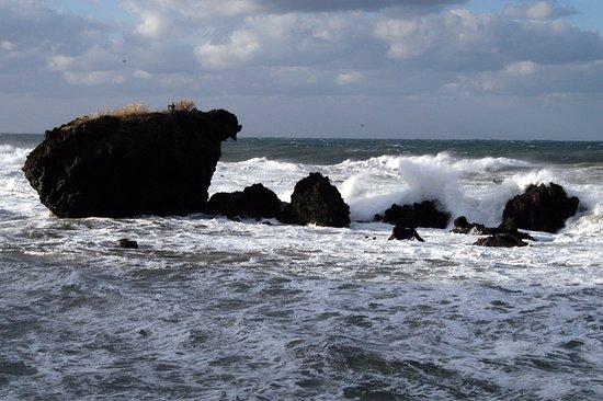 Tottoko Rock