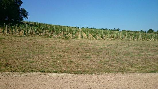 Saint-Pierre-sur-Dives, Frankrike: Del av vingården
