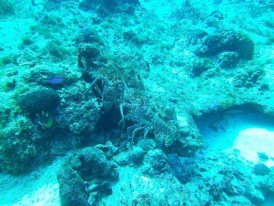 Liquid Blue Divers: UW Life