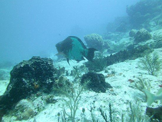 Liquid Blue Divers: Photogenic fish
