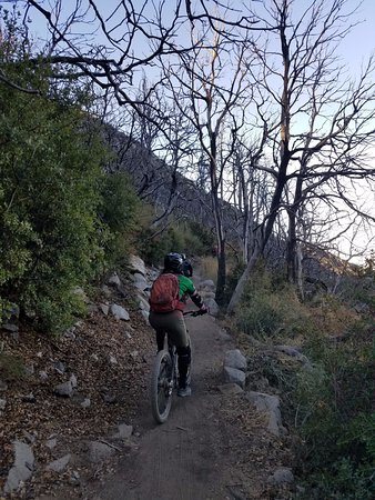 Altadena, CA: Great single track the whole way down