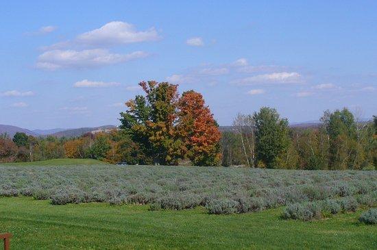 Stanstead, Canada: Magnifique champs a contempler avec les couleurs d automne.