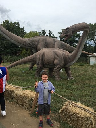 Field Station: Dinosaurs - Picture of Field Station