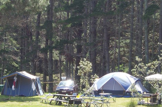 Opoutere Coastal Camping: Upper Camp