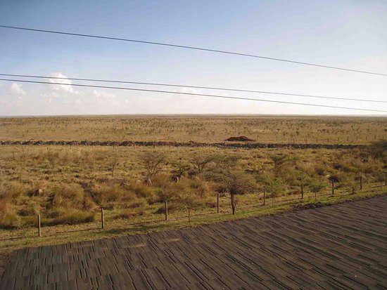 Ole Sereni: the park view from room