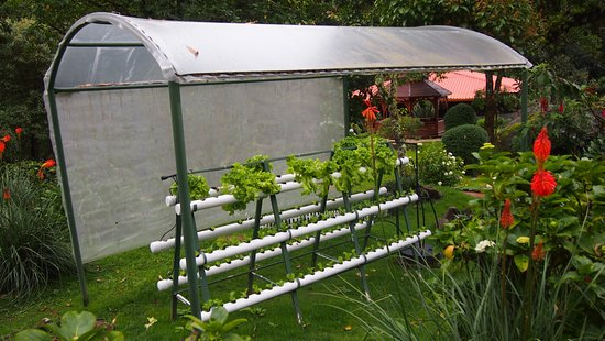 Hydroponic Kitchen Garden Picture Of Trogon Lodge San Gerardo De