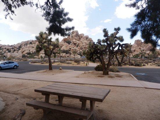 Twentynine Palms, CA: Area pic-nic al Josha Tree Natl. Park.
