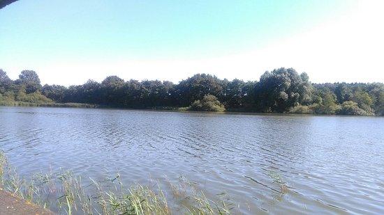 Fosses-la-Ville, Belgien: Le lac, la réserve ornithologique, les jardins thématiques et potagers ... baignade, détente, et