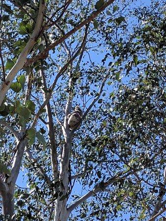 Rathdowney, ออสเตรเลีย: IMG_20160906_095749_large.jpg