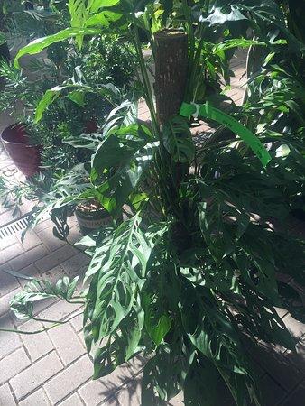 Photo of Botanical Garden Gethsemane Garden Center at 5739 N Clark St, Chicago, IL 60660, United States