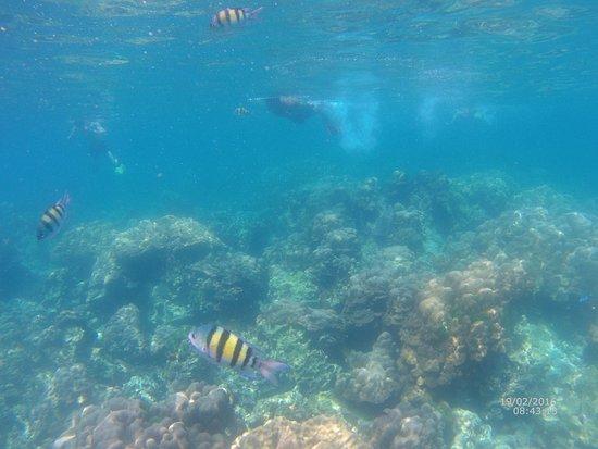 varan - Billede af Koh Rok Island, Ko Lanta - TripAdvisor