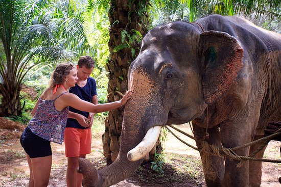 Surat Thani, Tailandia: Somboon the Elephant, enjoying a good nose rub :)