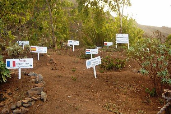 Serra de Malagueta: viveiro de endémicas apadrinhadas por embaixadas