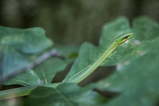 Sainte Genevieve, MO: Cute little snake on the trail