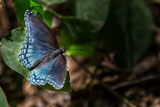 Sainte Genevieve, MO: Beautiful butterfly