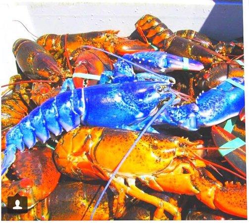 Cafe valmer : Pas bleu notre homard ???