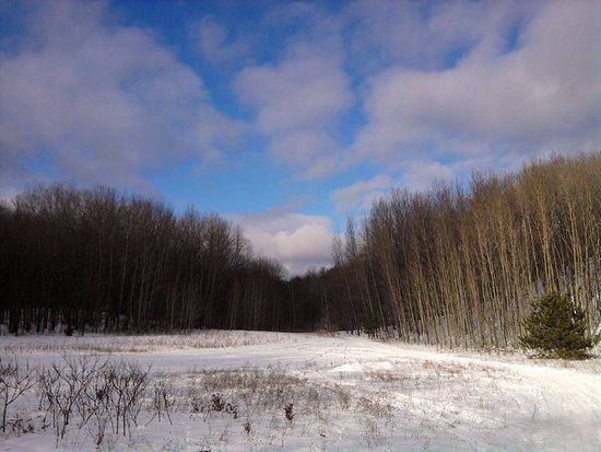 Boyne City, MI: Beautiful meadow along the hiking trail