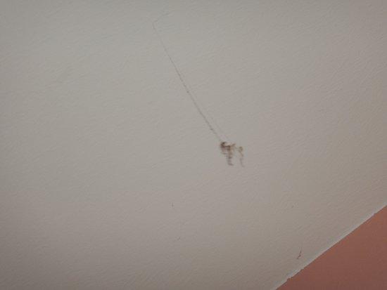 Hotel Holst : noch mehr Spinnwebendreck