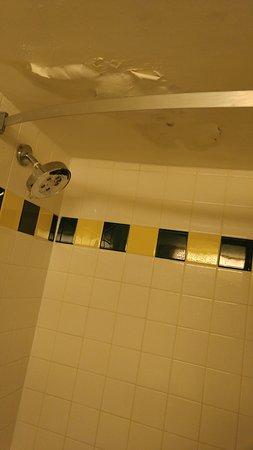Ramada Orlando Downtown : Moldy shower