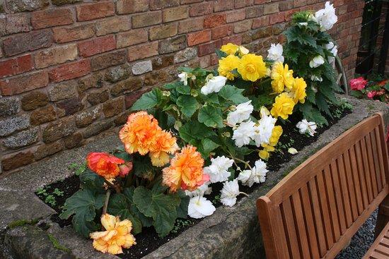 Wymondham, UK: Views of begonias.