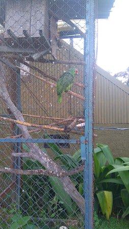 Grecia, Costa Rica: DSC_0104_large.jpg