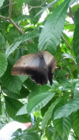 Butterfly Rainforest: 20160831_152522_HDR_large.jpg