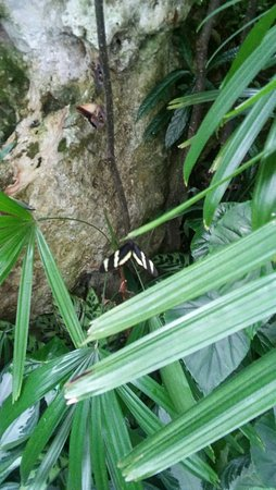 Butterfly Rainforest: 20160831_154901_HDR_large.jpg