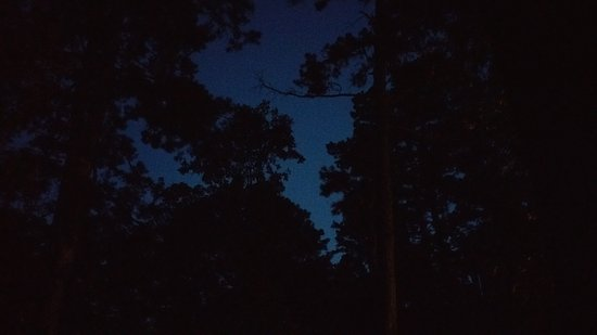 Oak Crest Cottages and Treehouses: night time view from back porch