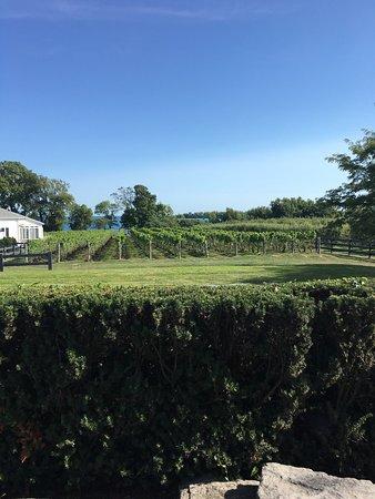 Waupoos Estates Winery: photo1.jpg